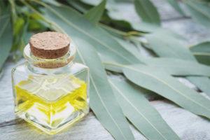 Oli d'eucaliptus