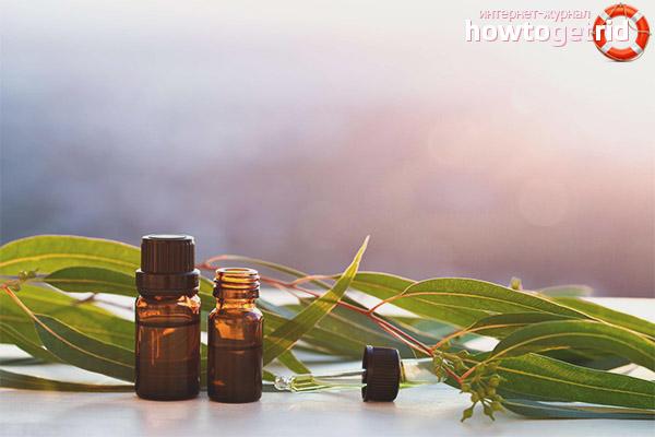 Óleo de Eucalipto em Aromaterapia
