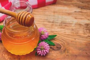 คุณสมบัติที่มีประโยชน์และข้อห้ามสำหรับโคลเวอร์น้ำผึ้ง
