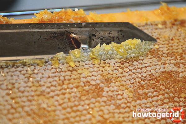 Les propietats curatives del segell de mel