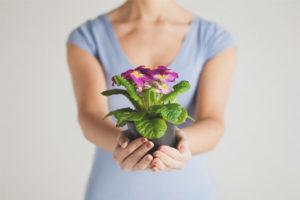 Puc donar flors en pots