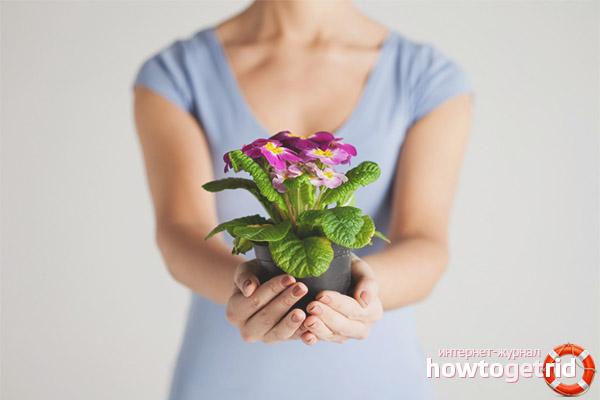 Posso dar flores em vasos