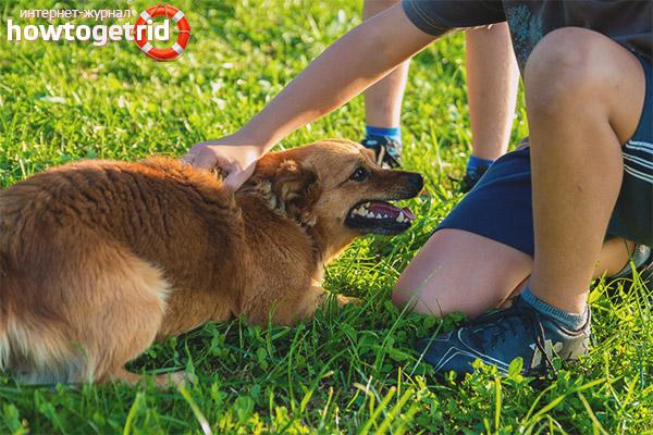 Equip d'entrenament de gossos Mentint!