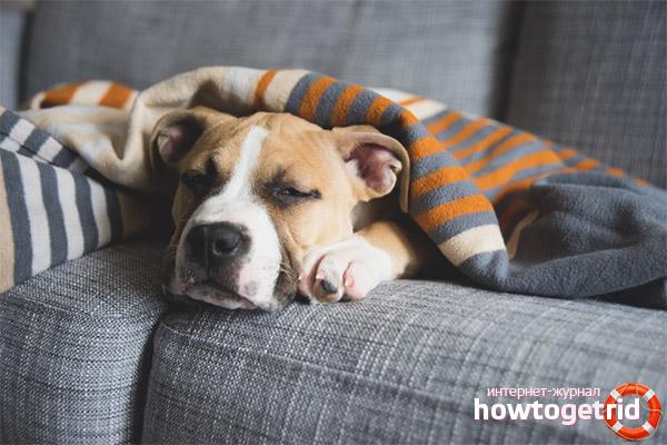 Depressão no inverno ou pós-parto em cães