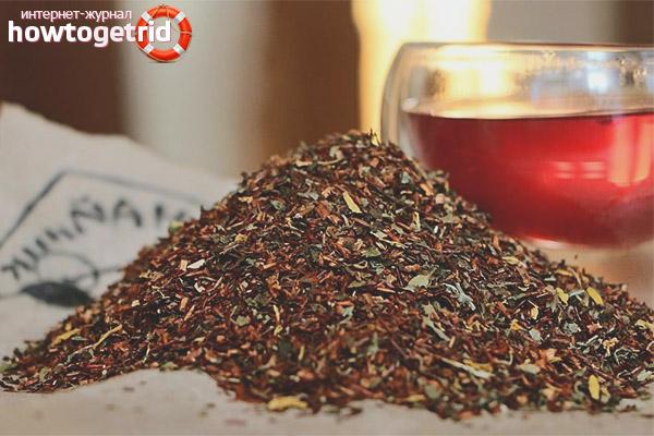 Nützliche Eigenschaften von Rooibos-Tee