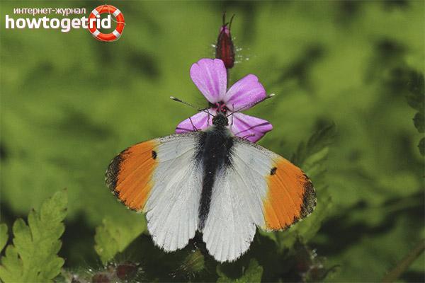 Butterfly Dawn