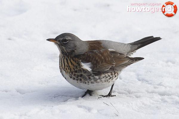 Hniezdenie poľných vtákov