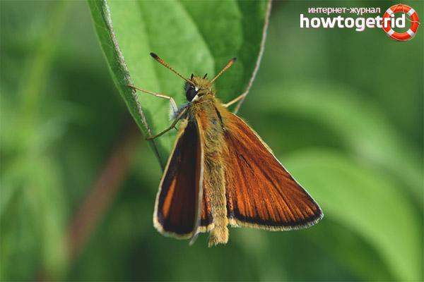 Schmetterlingslebensraum