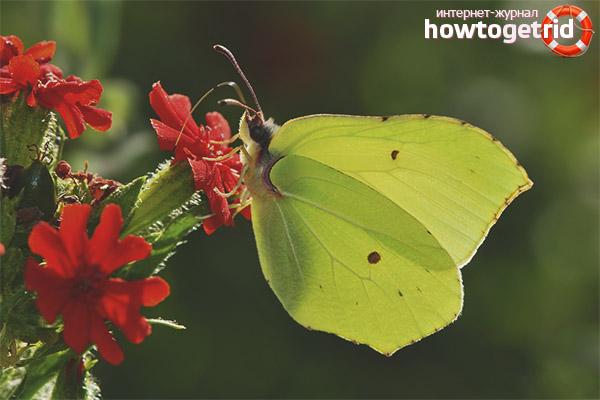 Styl życia motyla motyla