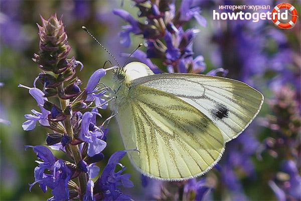 Weiblicher repetitiver Schmetterlingslebensstil