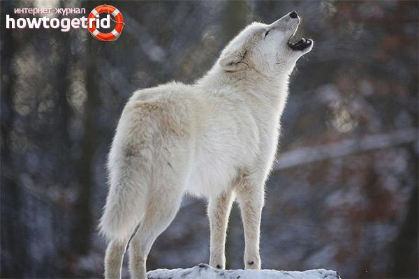 Vissa typer av vargar
