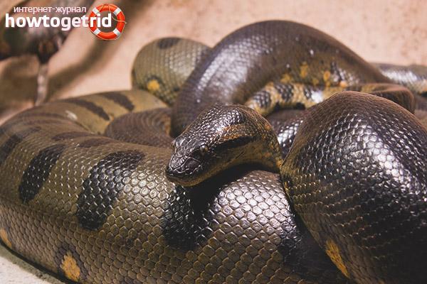 Anaconda nutrition