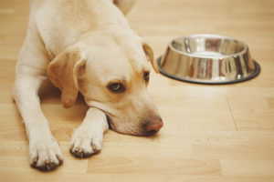 Al·lèrgia al menjar per a gossos