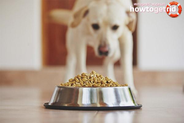 Hrana hipoalergenica pentru caini