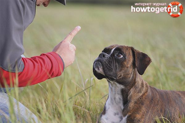Möglichkeiten zur Bekämpfung des dominanten Hundeverhaltens