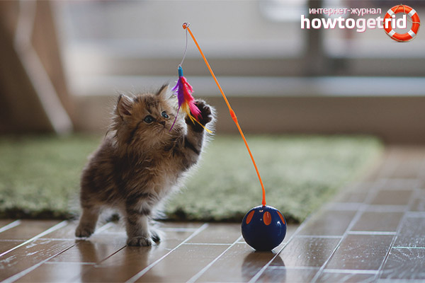 Apa Yang Anda Perlukan Untuk Anak Kucing Di Apartmen