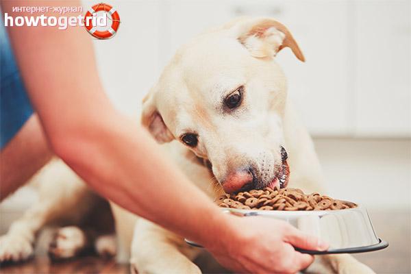 Cik bieži barot suni