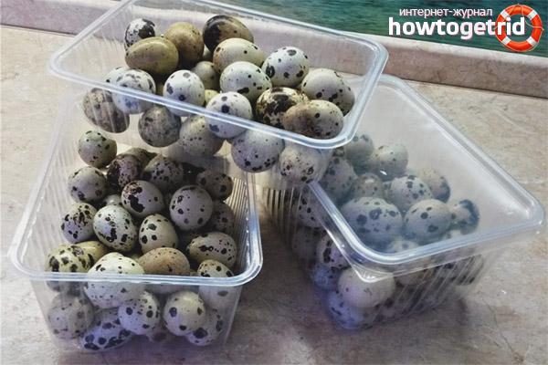 Cách bảo quản trứng cút