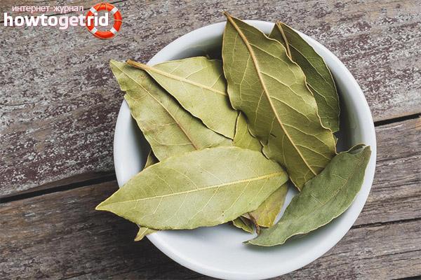 Kontraindikasi daun salam dari sendi