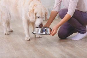 Hvor mange gange om dagen at fodre en hund