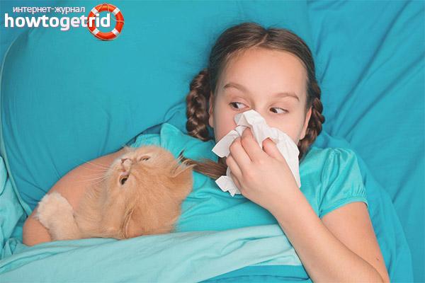 Com fer front a les al·lèrgies infantils en animals