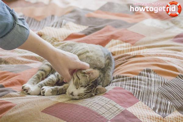 Kā atradināt kaķi, lai rakstītu uz gultas