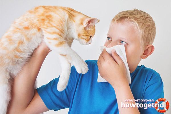 Com és una al·lèrgia als gats en un nen