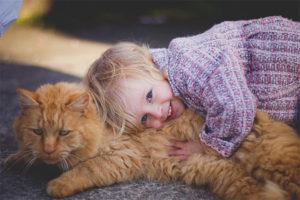 Quina raça de gats triar per a un nen