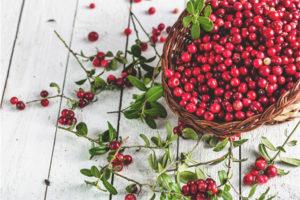 Pot lingonberries amb diabetis