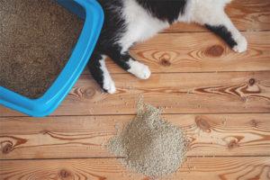 Per què el gat va al vàter passat la safata