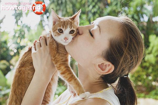 Kāpēc kaķus nevar noskūpstīt