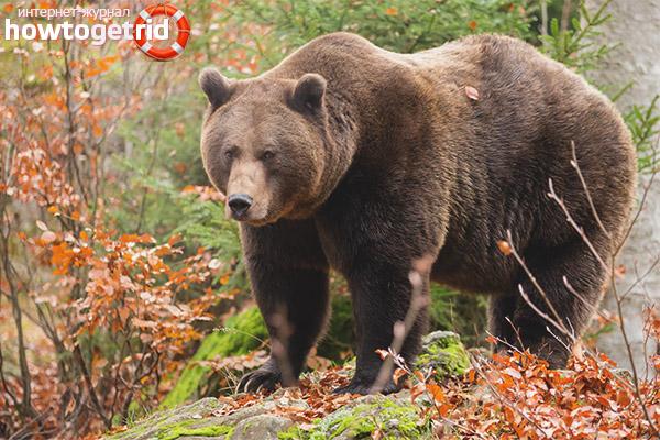 Braunbärenlebensräume