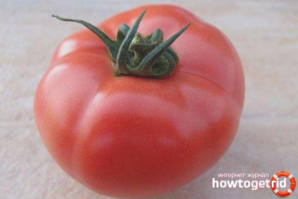 Zalety pomidorów Pink Claire F1