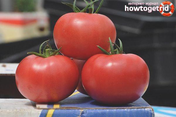 Pomidorowa Różowa Claire F1