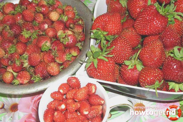 Отглеждане на ягоди и диви ягоди