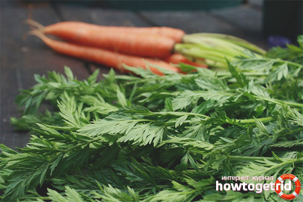 Cách dùng ngọn cà rốt