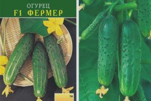 Cogombre Farmer F1