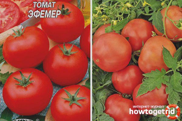 Tomates Efêmeros