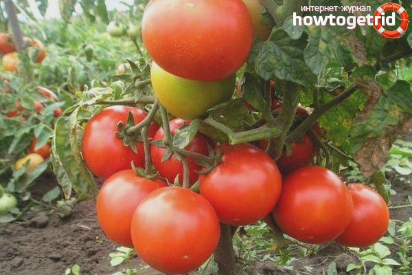 Efeito Tomate Variedade