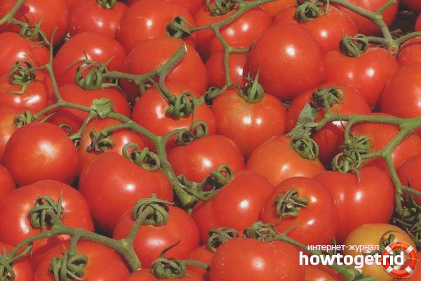 Elf Tomaten