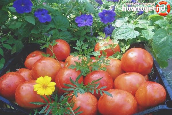 Ale Tomaten