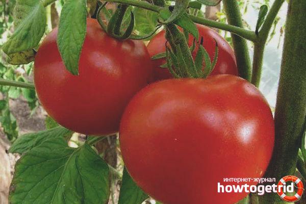 Yula Tomatoes