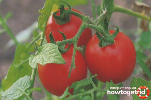 Tomatenäpfel im Schnee