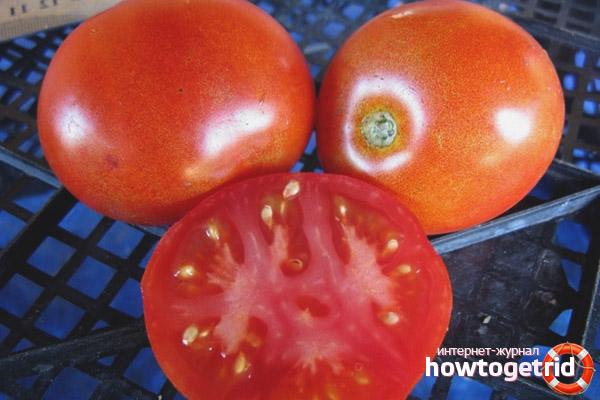 Ephemer do tomate