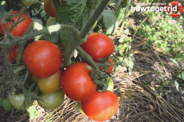 Efeito tomate