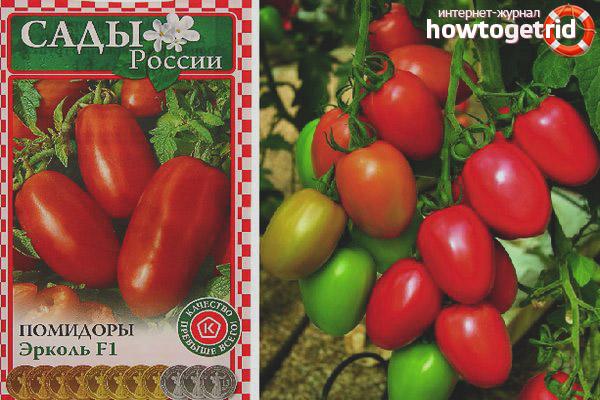 Tomaten Ercol