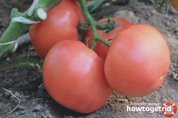 Esmira F1 de tomate