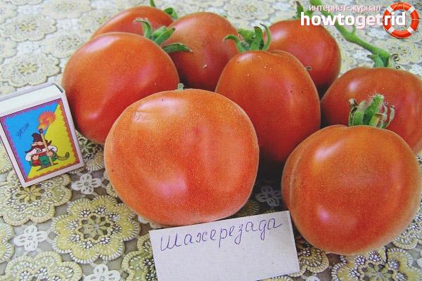Tomatenscheherazade