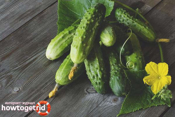 Salatalık tarımı Khutorok F1