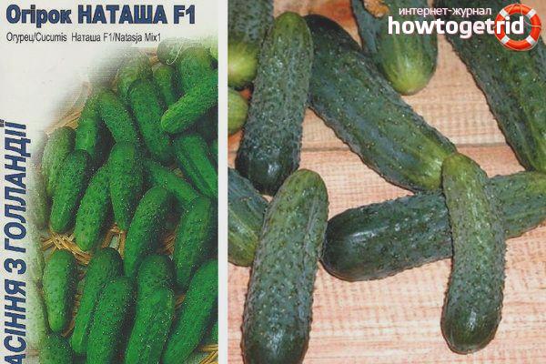 Cultiu de varietats de cogombres Natasha